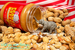 Topsy preferred his peanuts creamed, and he always liked being the first to dip his trunk in the jar. - While you were sleeping...  Photography by Lon Casler Bixby - Copyright - All Rights Reserved - www.whileyouweresleeping.photography/